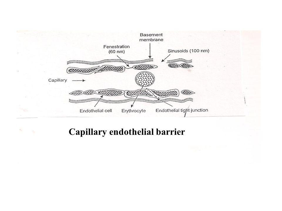 . Capillary endothelial barrier