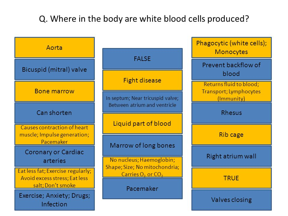 Q. Where in the body are white blood cells produced.