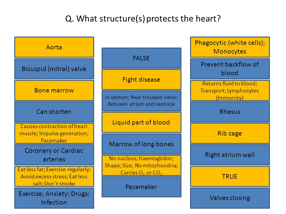 Q. What structure(s) protects the heart.