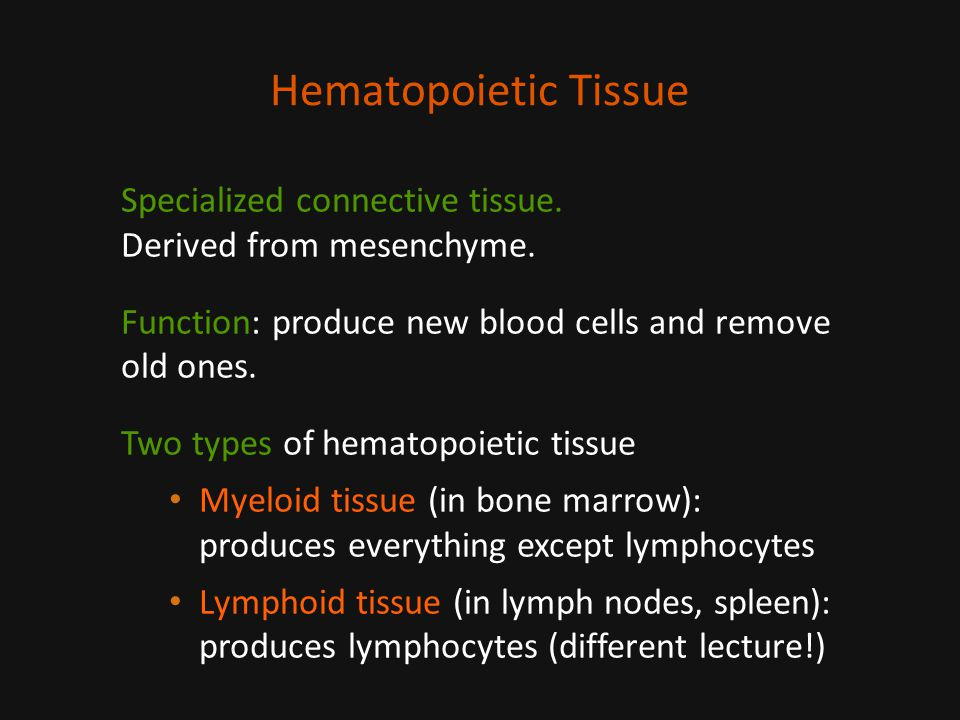 Hematopoietic Tissue Specialized connective tissue.