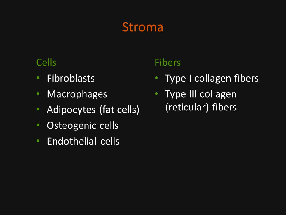 Stroma Cells Fibroblasts Macrophages Adipocytes (fat cells) Osteogenic cells Endothelial cells Fibers Type I collagen fibers Type III collagen (reticular) fibers