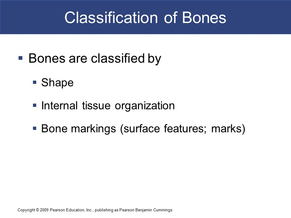 Copyright © 2009 Pearson Education, Inc., publishing as Pearson Benjamin Cummings Classification of Bones  Bones are classified by  Shape  Internal tissue organization  Bone markings (surface features; marks)