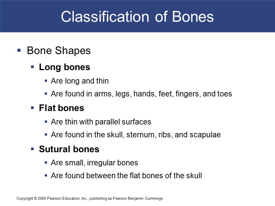 Copyright © 2009 Pearson Education, Inc., publishing as Pearson Benjamin Cummings Classification of Bones  Bone Shapes  Irregular bones  Have complex shapes  Examples: spinal vertebrae, pelvic bones  Short bones  Are small and thick  Examples: ankle and wrist bones  Sesamoid bones  Are small and flat  Develop inside tendons near joints of knees, hands, and feet