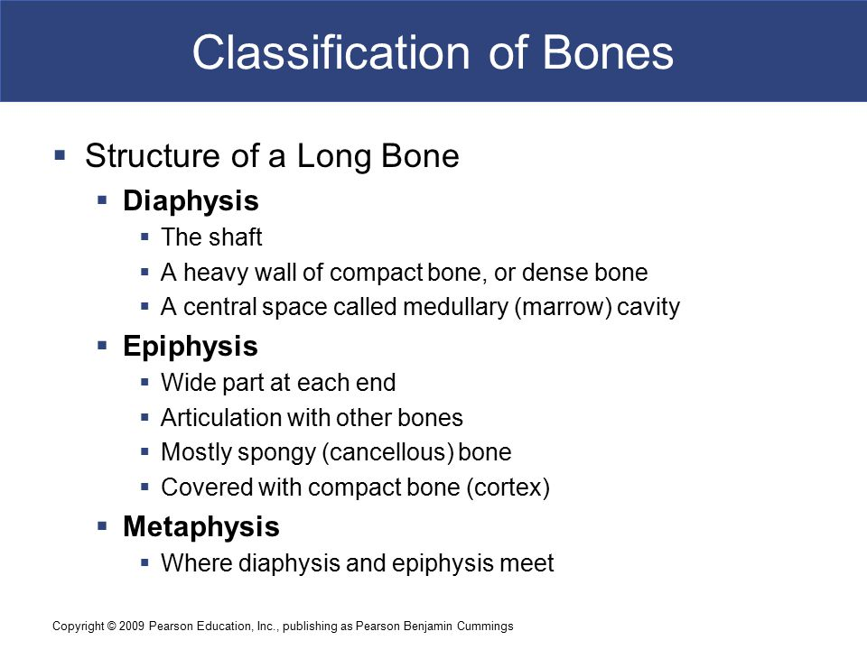 Copyright © 2009 Pearson Education, Inc., publishing as Pearson Benjamin Cummings Classification of Bones  Structure of a Long Bone  Diaphysis  The shaft  A heavy wall of compact bone, or dense bone  A central space called medullary (marrow) cavity  Epiphysis  Wide part at each end  Articulation with other bones  Mostly spongy (cancellous) bone  Covered with compact bone (cortex)  Metaphysis  Where diaphysis and epiphysis meet