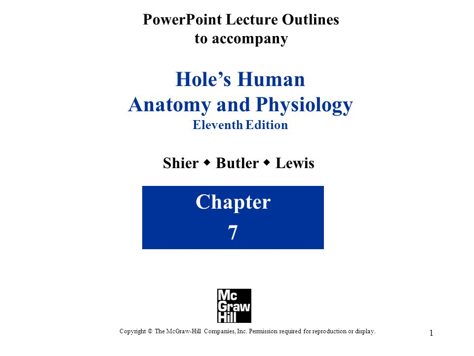 1 PowerPoint Lecture Outlines to accompany Hole's Human Anatomy and Physiology Eleventh Edition Shier  Butler  Lewis Chapter 7 Copyright © The McGraw-Hill Companies, Inc.