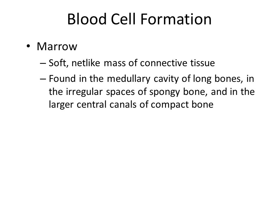 Blood Cell Formation Marrow – 2 types: red marrow and yellow marrow Red marrow – Functions in the production of red blood cells (erythrocytes), white blood cells (leukocytes), and blood platelets – Has a red color due to the oxygen-carrying pigment hemoglobin that is found in the red blood cells – Occupies the cavities of most bones in infants but is mostly replaced by yellow marrow as individuals get older » In adults, red marrow is found primarily in the spongy bone of the skull, ribs, sternum, clavicles, vertebrae, and hipbones Yellow marrow – Store fat – Is inactive in blood cell production – Can change back into red marrow to produce blood cells if the blood cell supply is deficient