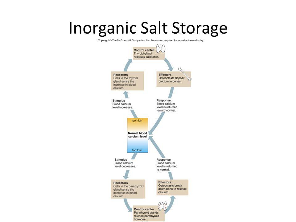 Bone tissue also stores smaller amounts of magnesium, sodium, potassium, and carbonate ions as well as accumulates harmful metallic elements such as lead, radium, and strontium
