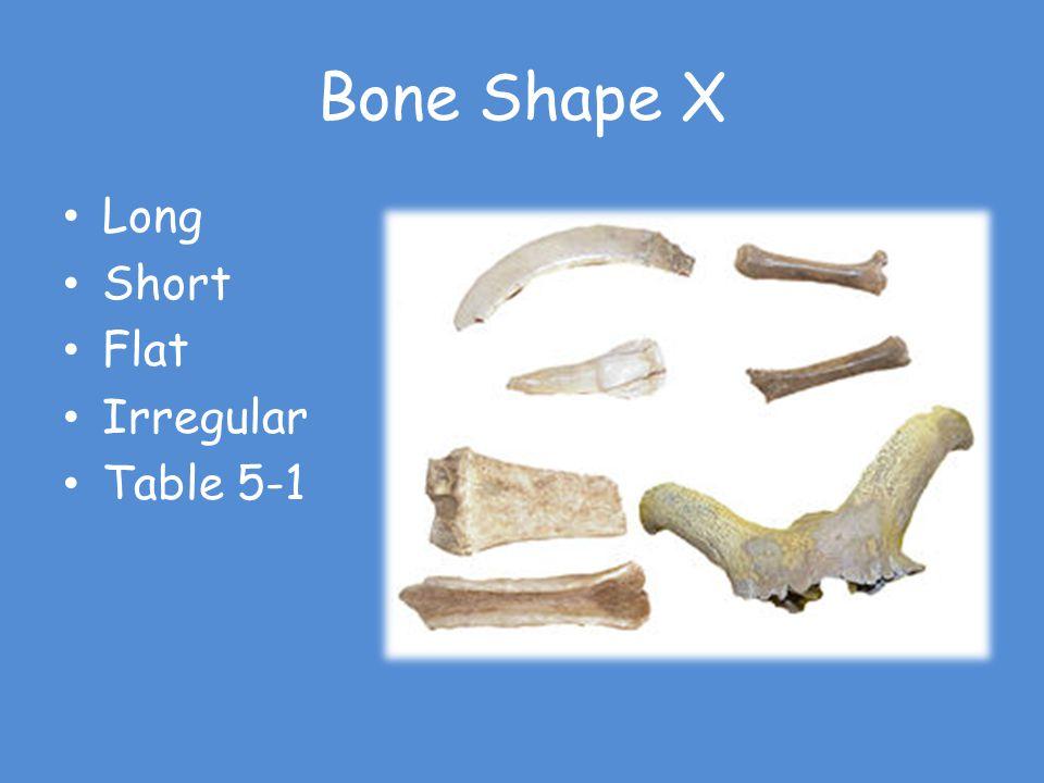 Bone Shape X Long Short Flat Irregular Table 5-1