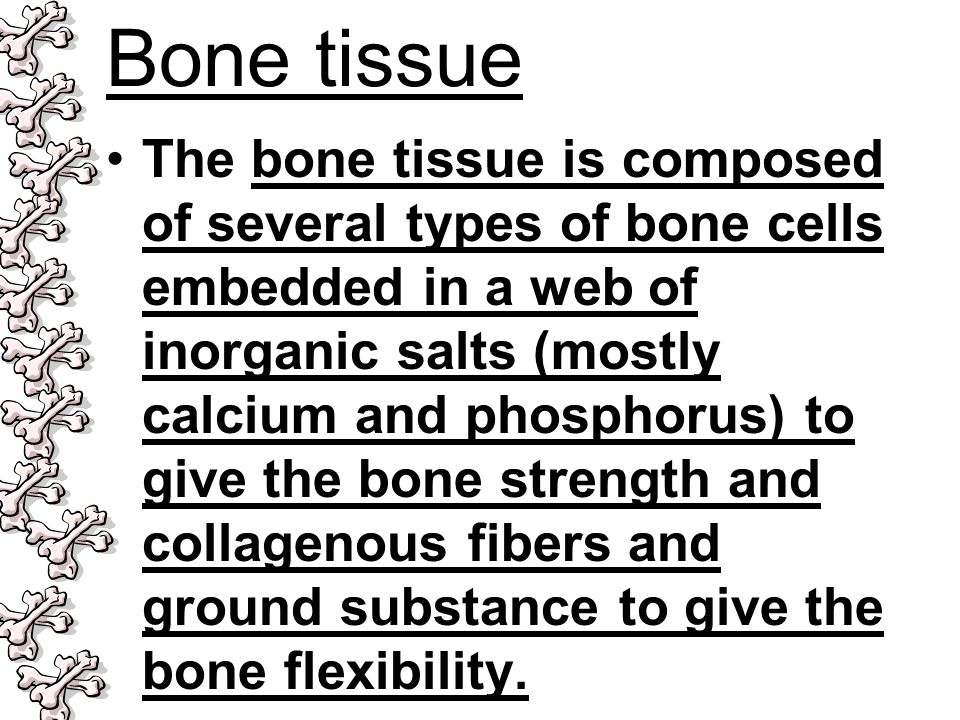 Bone tissue The bone tissue is composed of several types of bone cells embedded in a web of inorganic salts (mostly calcium and phosphorus) to give th