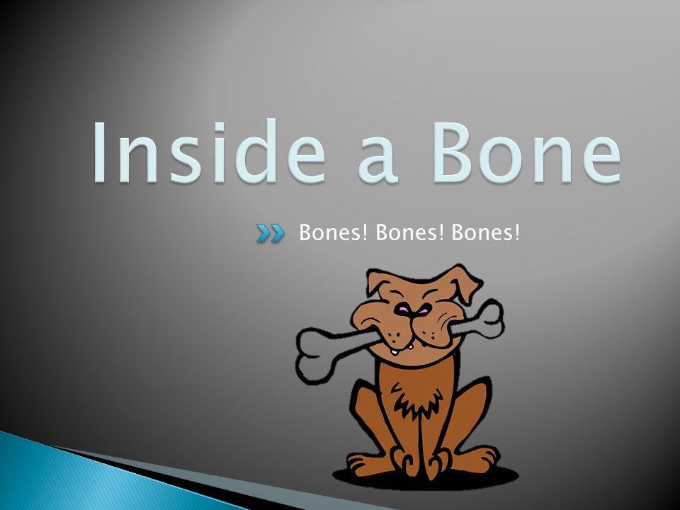 Bones! Bones! Bones!