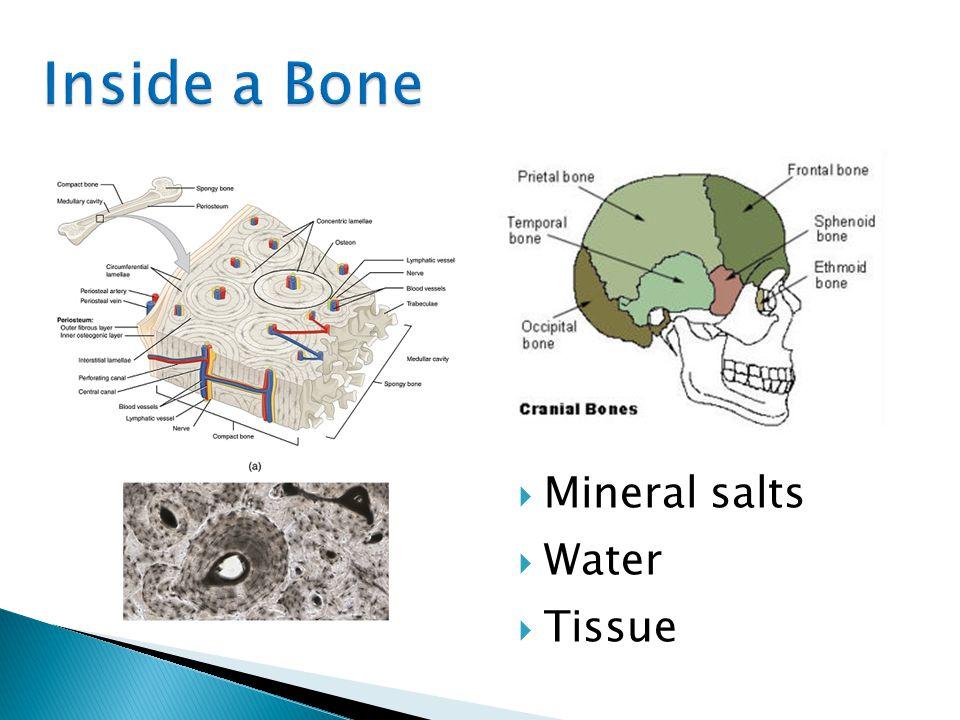  Mineral salts  Water  Tissue