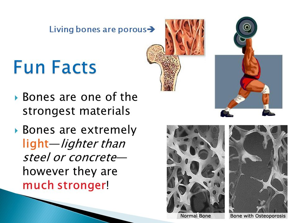  Bones are one of the strongest materials  Bones are extremely light—lighter than steel or concrete— however they are much stronger.