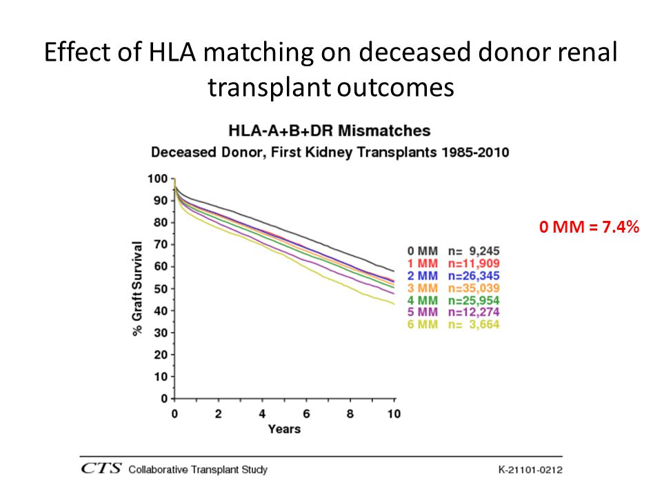 Effect of HLA matching on deceased donor renal transplant outcomes 0 MM = 7.4%