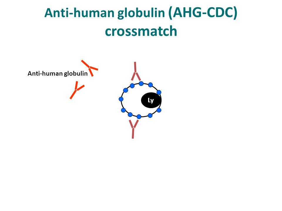 Ly Anti-human globulin (AHG-CDC) crossmatch Anti-human globulin