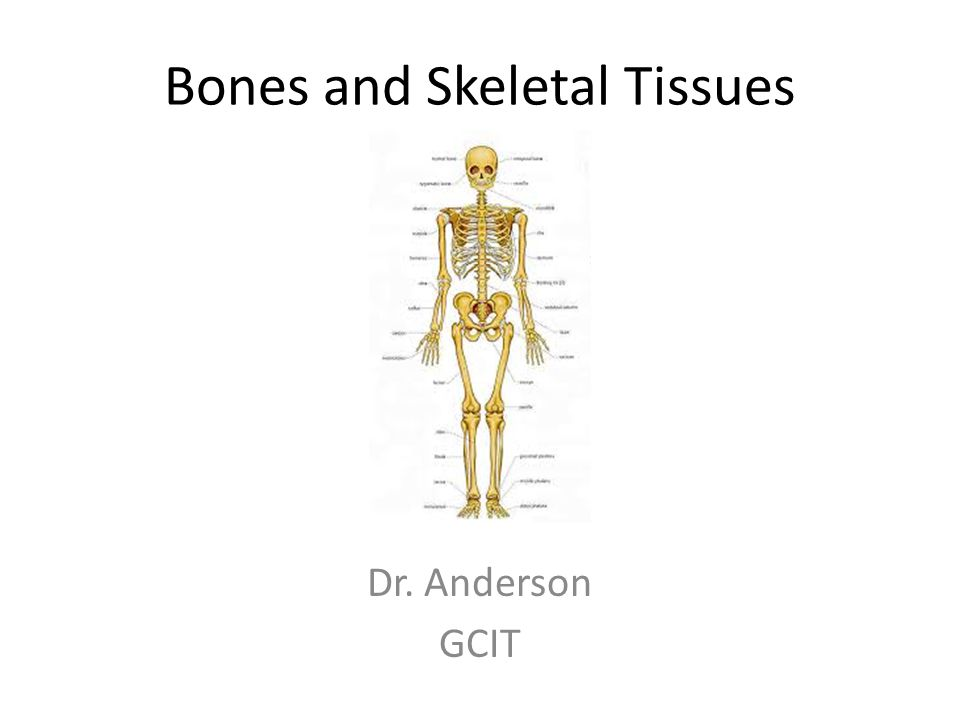 Bones and Skeletal Tissues Dr. Anderson GCIT