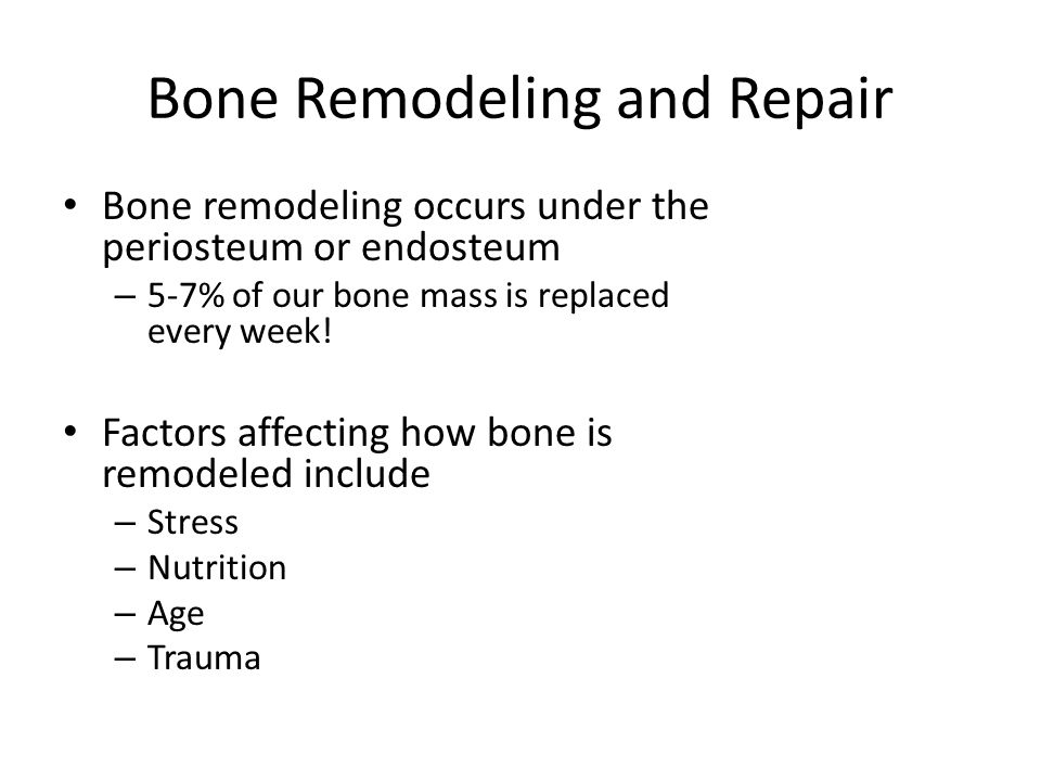 Bone Remodeling and Repair Bone remodeling occurs under the periosteum or endosteum – 5-7% of our bone mass is replaced every week! Factors affecting