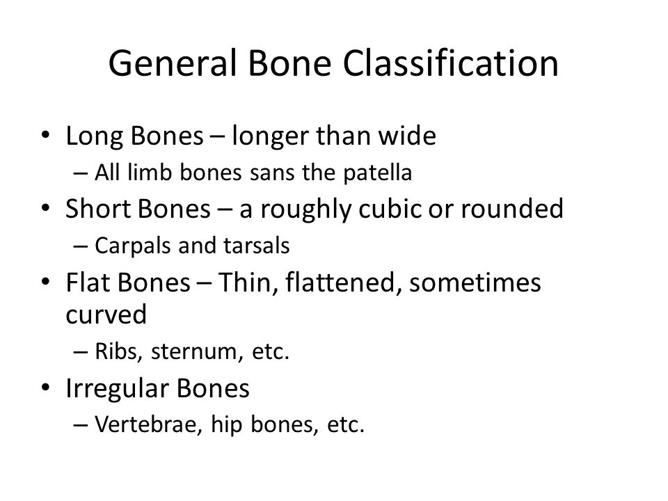 General Bone Classification Long Bones – longer than wide – All limb bones sans the patella Short Bones – a roughly cubic or rounded – Carpals and tarsals Flat Bones – Thin, flattened, sometimes curved – Ribs, sternum, etc.