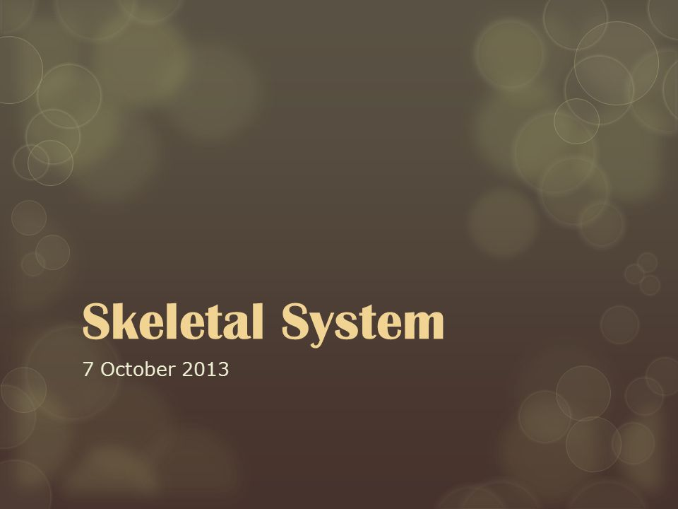 Skeletal System 7 October 2013
