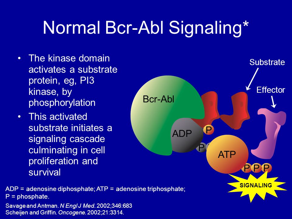 Normal Bcr-Abl Signaling* The kinase domain activates a substrate protein, eg, PI3 kinase, by phosphorylation This activated substrate initiates a sig