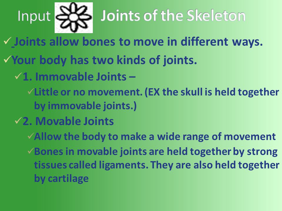 Joints allow bones to move in different ways. Your body has two kinds of joints.