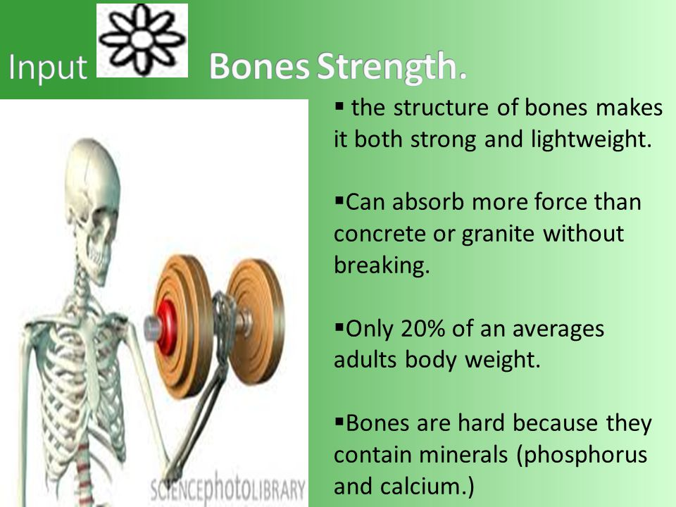 the structure of bones makes it both strong and lightweight.