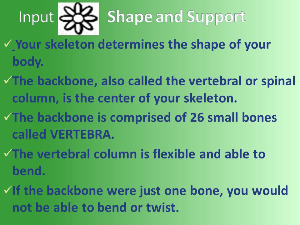 Your skeleton determines the shape of your body.