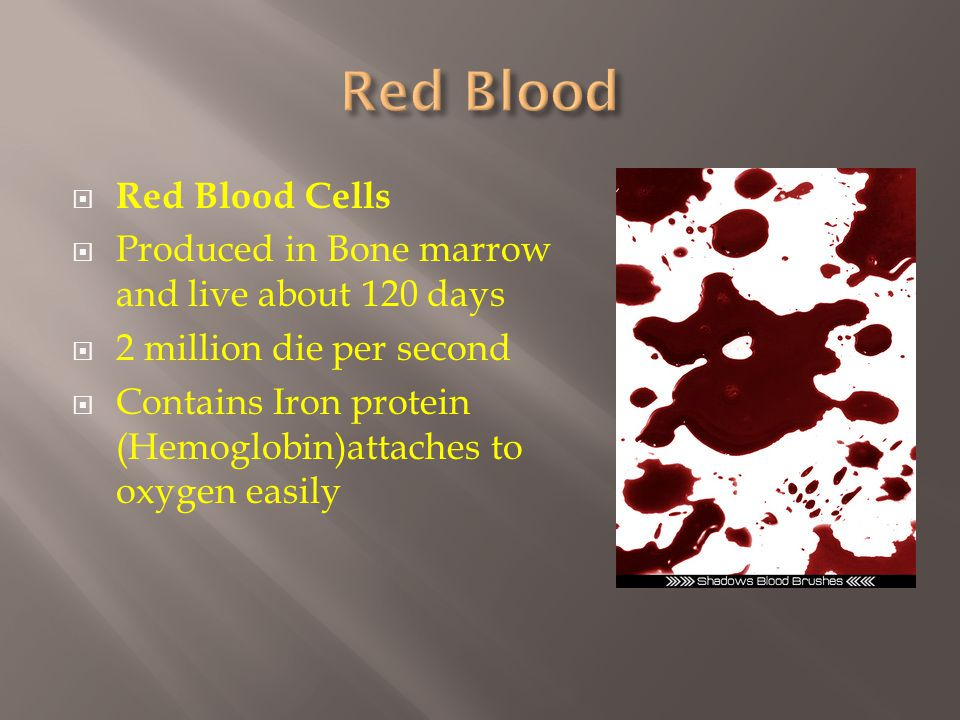  Red Blood Cells  Produced in Bone marrow and live about 120 days  2 million die per second  Contains Iron protein (Hemoglobin)attaches to oxygen easily