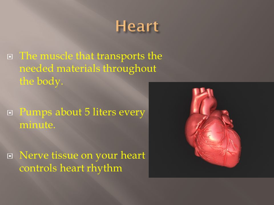  The muscle that transports the needed materials throughout the body.