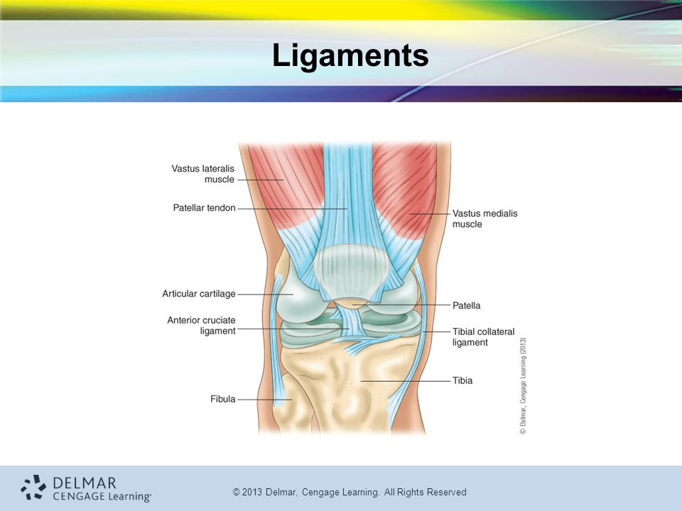 © 2013 Delmar, Cengage Learning. All Rights Reserved Ligaments