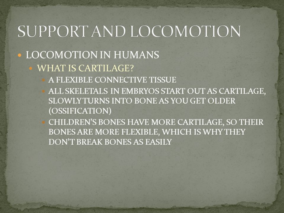 LOCOMOTION IN HUMANS HOW DO BONES FORM.