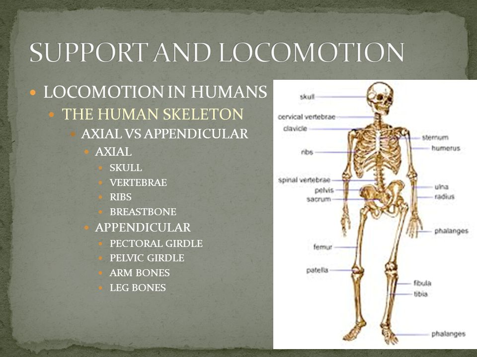 LOCOMOTION IN HUMANS