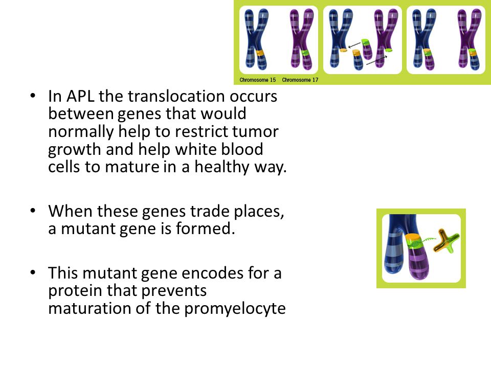 In APL the translocation occurs between genes that would normally help to restrict tumor growth and help white blood cells to mature in a healthy way.