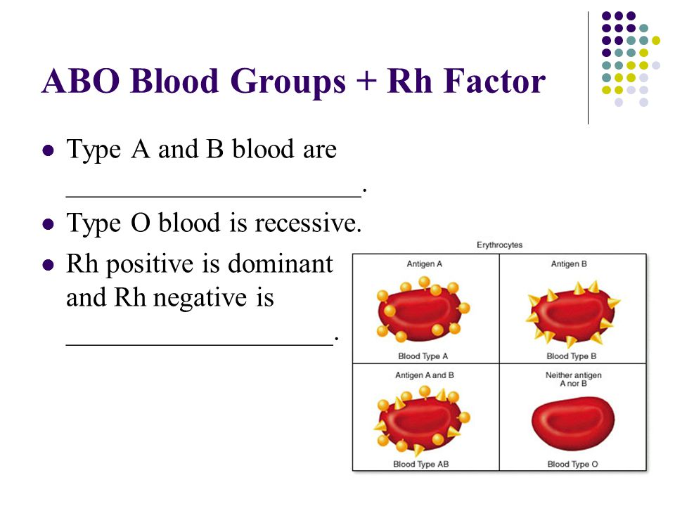 ABO Blood Groups + Rh Factor Type A and B blood are _____________________. Type O blood is recessive. Rh positive is dominant and Rh negative is _____