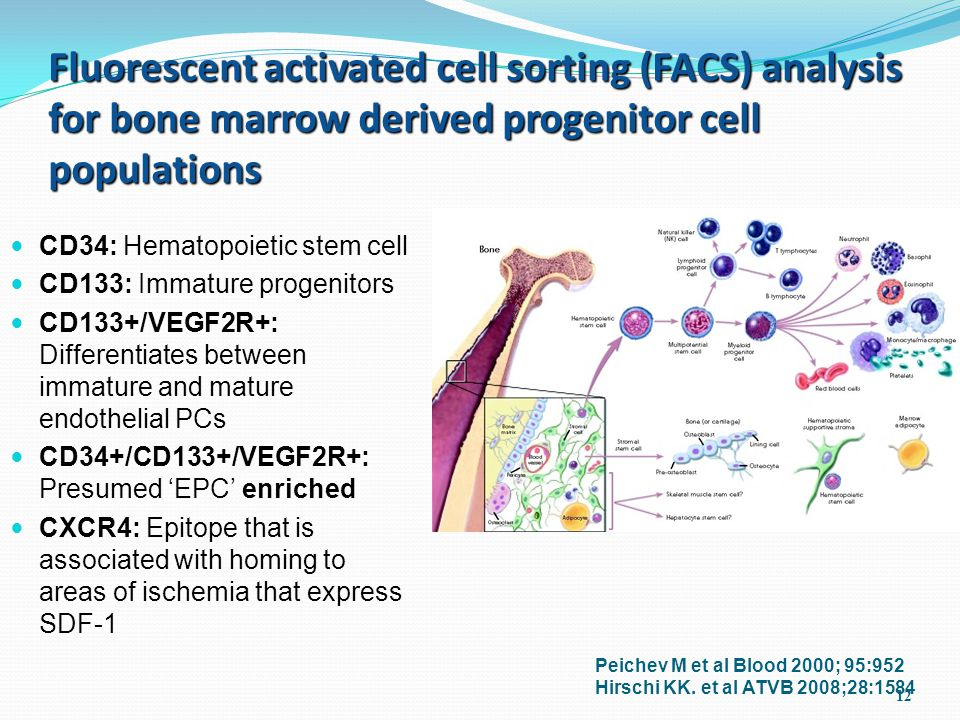 12 Fluorescent activated cell sorting (FACS) analysis for bone marrow derived progenitor cell populations CD34: Hematopoietic stem cell CD133: Immature progenitors CD133+/VEGF2R+: Differentiates between immature and mature endothelial PCs CD34+/CD133+/VEGF2R+: Presumed 'EPC' enriched CXCR4: Epitope that is associated with homing to areas of ischemia that express SDF-1 Peichev M et al Blood 2000; 95:952 Hirschi KK.