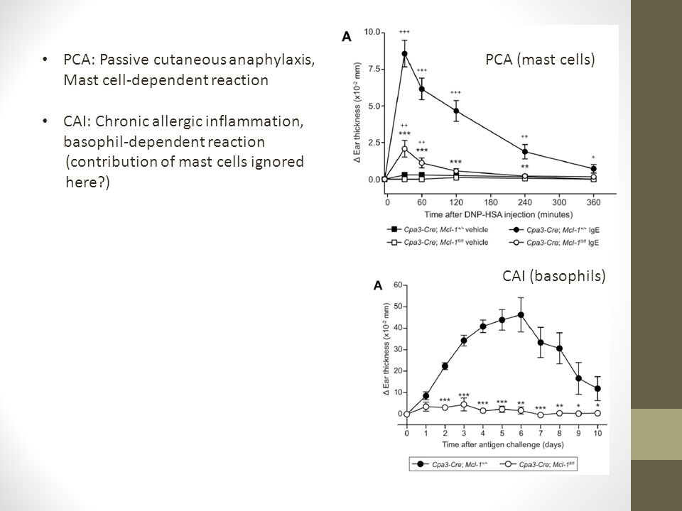PCA (mast cells) CAI (basophils) PCA: Passive cutaneous anaphylaxis, Mast cell-dependent reaction CAI: Chronic allergic inflammation, basophil-depende