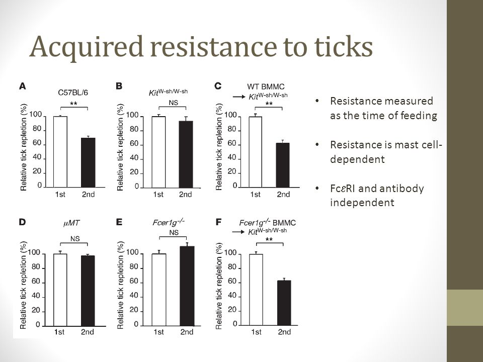 Acquired resistance to ticks Resistance measured as the time of feeding Resistance is mast cell- dependent Fc  RI and antibody independent