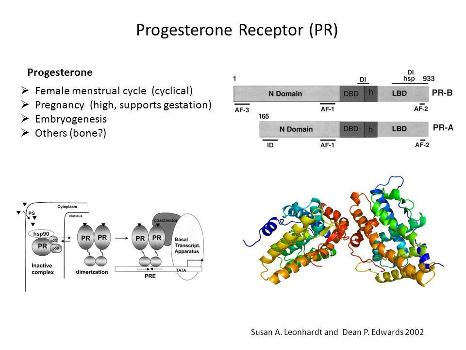 Progesterone Receptor (PR) Susan A.Leonhardt and Dean P.