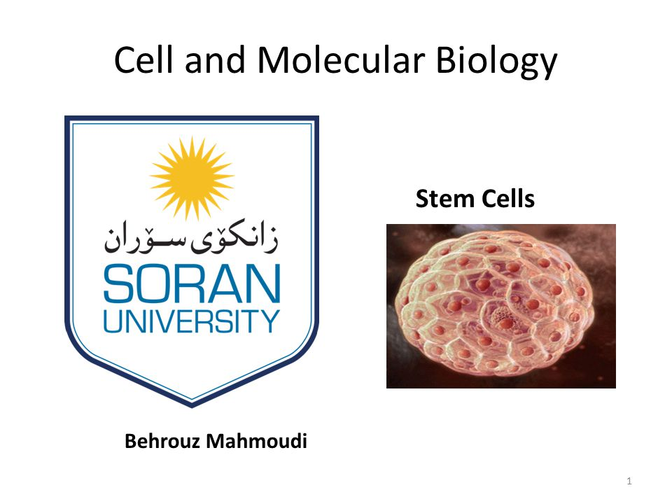 Why is Stem Cell Research So Important to All of Us.