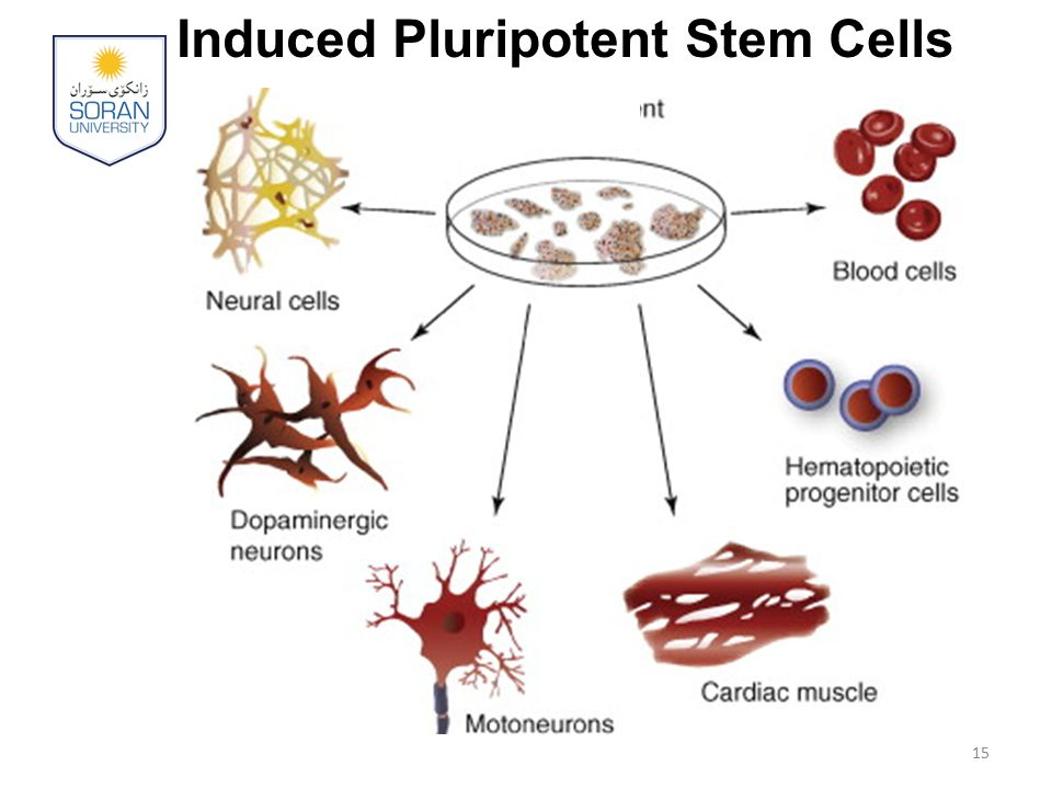 Induced Pluripotent Stem Cells 15