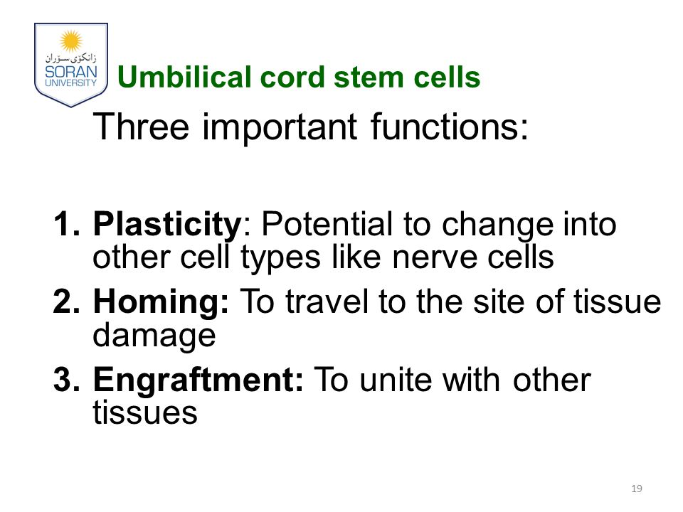 Umbilical cord stem cells Three important functions: 1.Plasticity: Potential to change into other cell types like nerve cells 2.Homing: To travel to t