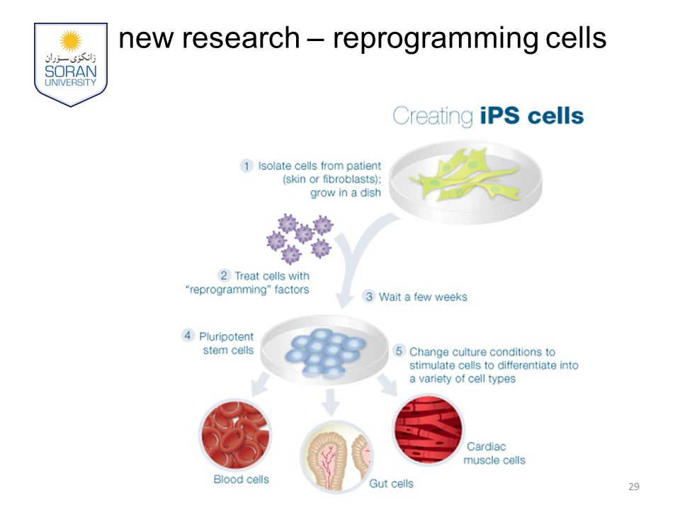 new research – reprogramming cells 29
