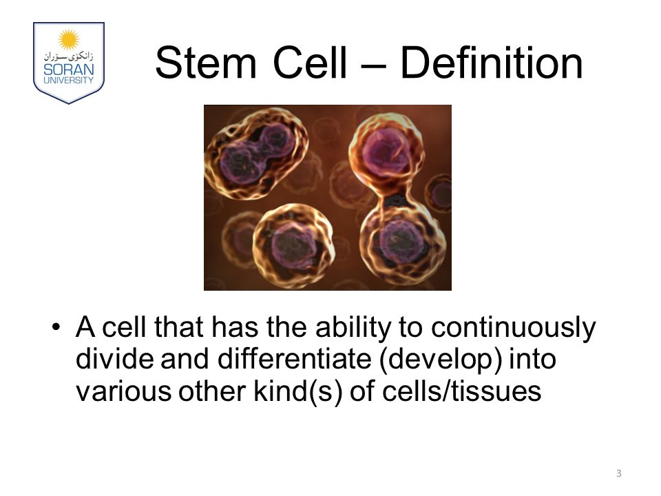 Stem Cell – Definition A cell that has the ability to continuously divide and differentiate (develop) into various other kind(s) of cells/tissues 3