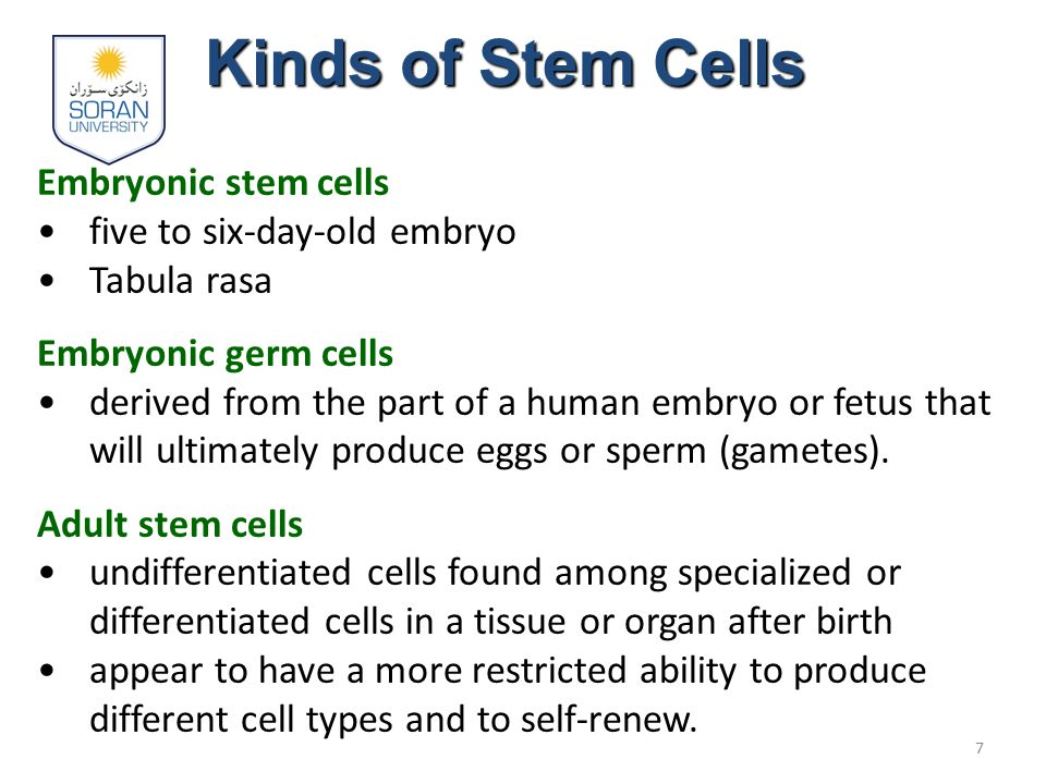 Pluripotent Stem Cells – more potential to become any type of cell 8