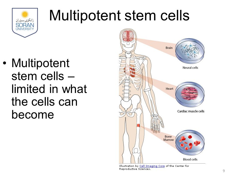 Stem Cell Applications Tissue repair - nerve, heart, muscle, organ, skin Cancers Autoimmune diseases - diabetes, rheumatoid arthritis, MS 20