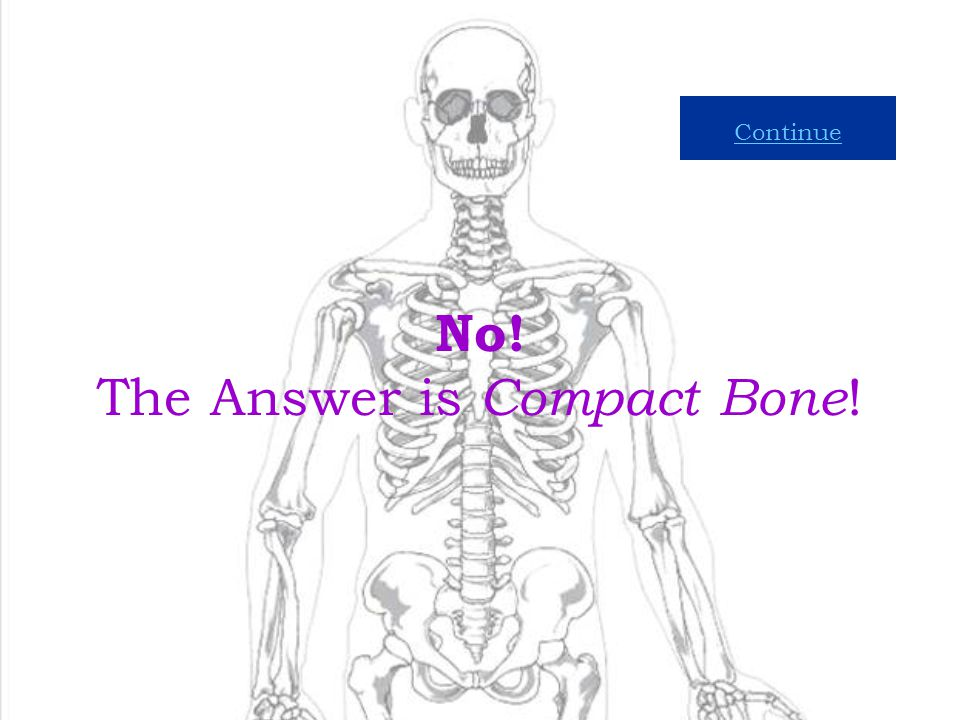 9 Which Kind of Bone Tissue is Hard and Compact? Compact Bone Spongy Bone Marrow