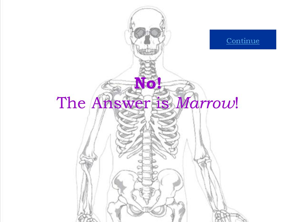 12 Compact Bone Spongy Bone Marrow What Type of Bone Makes Blood Cells and Stores Fat?