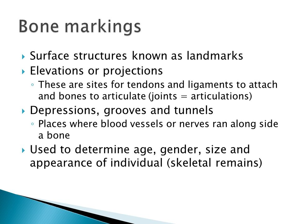  Surface structures known as landmarks  Elevations or projections ◦ These are sites for tendons and ligaments to attach and bones to articulate (joints = articulations)  Depressions, grooves and tunnels ◦ Places where blood vessels or nerves ran along side a bone  Used to determine age, gender, size and appearance of individual (skeletal remains)
