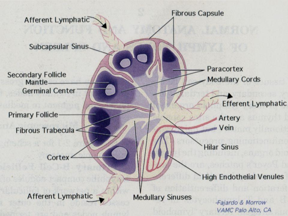 Primary centrol nervous system lymphoma, PCNSL