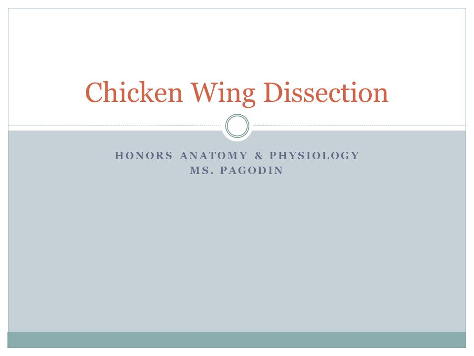 HONORS ANATOMY & PHYSIOLOGY MS. PAGODIN Chicken Wing Dissection