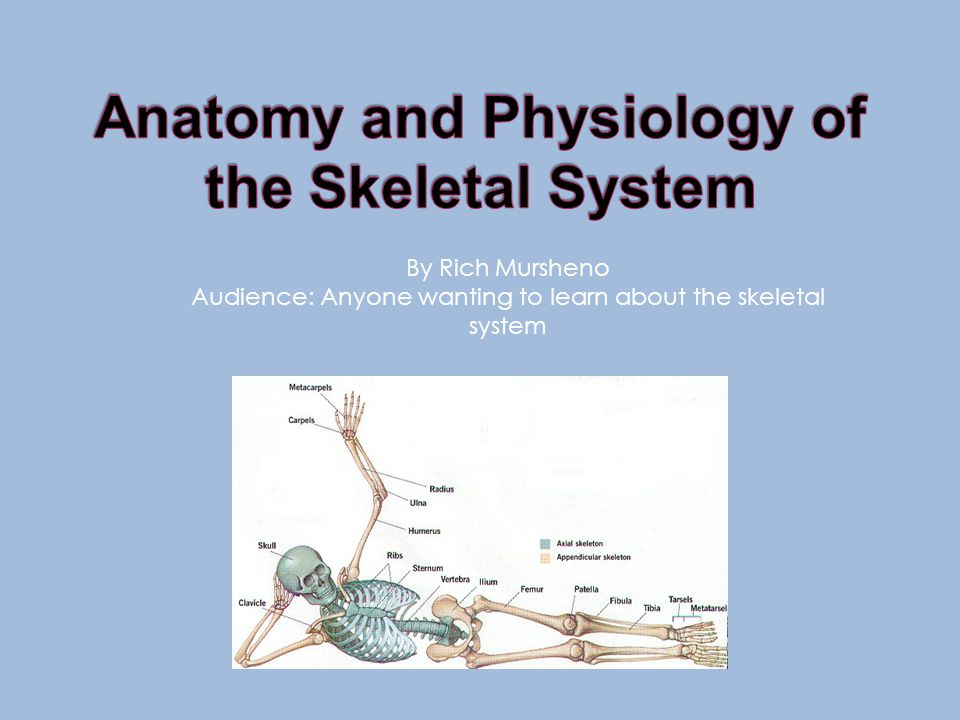 By Rich Mursheno Audience: Anyone wanting to learn about the skeletal system